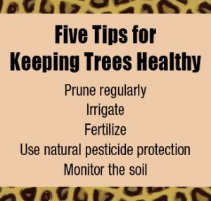 Five Tips for Keeping Trees Healthy