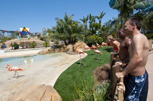 More than a dozen Caribbean flamingos greet guests as they enter Aquatica San Diego. Photo by Mike Aguilera/SeaWorld® San Diego.