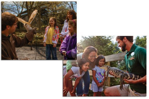 Naturalist Patrick Miller shows guests animals at  ZooAmerica North American Wildlife Park in Hershey, Pa. This spring, the zoo will be featuring a new exhibit related to the great horned owl.