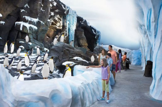 A penguin habitat at SeaWorld Orlando. Guests can purchase one-time Quick Queue passes to their favorite  SeaWorld Orlando attractions in advance.