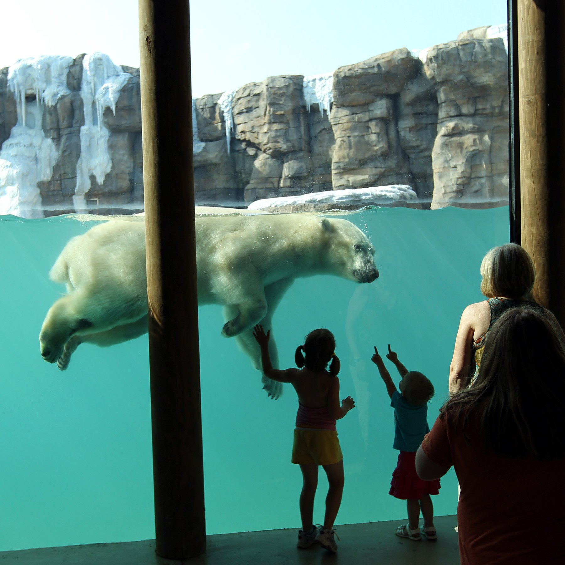 Kansas City Zoo Polar Bear Passage:<br/>A World-Class Attraction