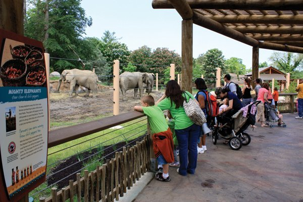 Zoo Exhibit Redesign and Elephant Conservation