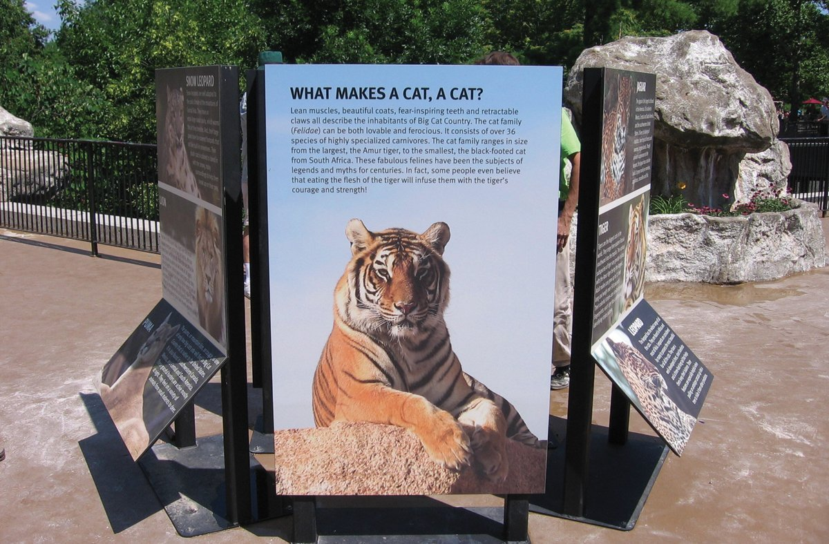 Big Cat Fever – Zoo Exhibits Educate While Promoting Visitation