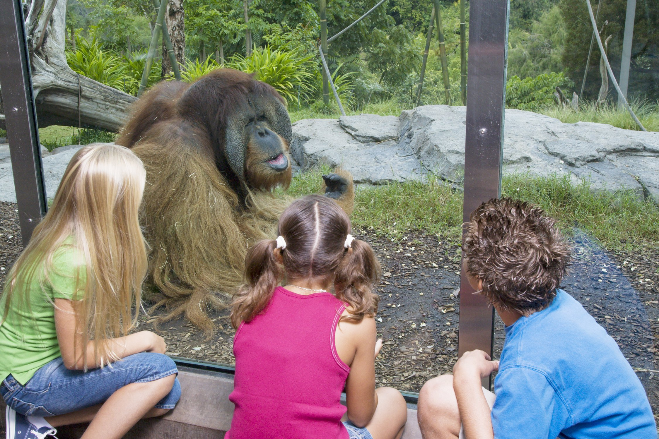 The Spring Spruce-Up <br/>How Zoos Get Ready for the Summer Season